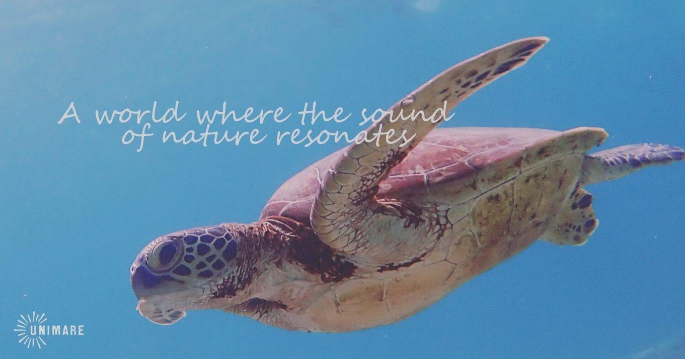 ビーチから入るだけで、癒しのウミガメとの高遭遇率!!
