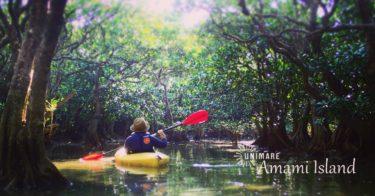 マングローブカヌー絶景ツアー