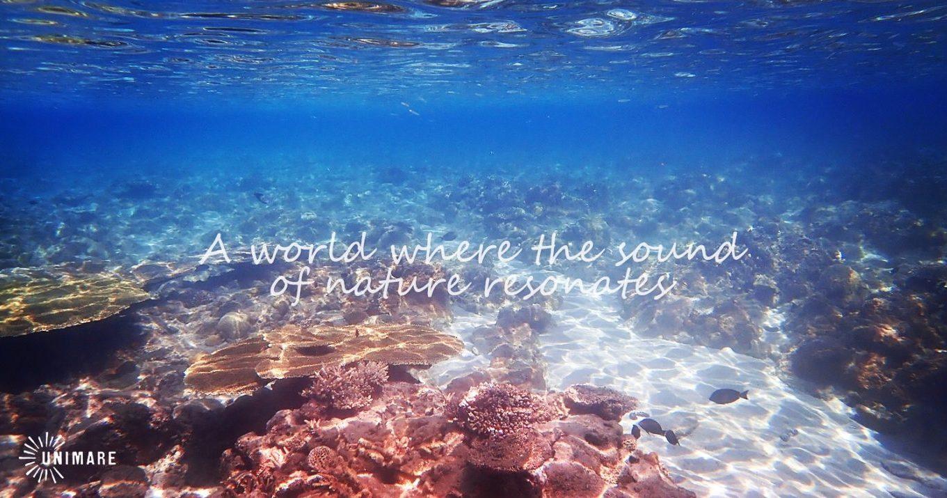 奄美の海のポテンシャルは世界に負けず、東洋のガラパゴスと例えられるほど♪